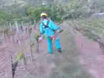 Пьяный садовник