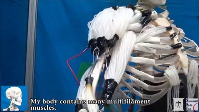 Musculoskeletal Robot Driven by Multifilament Muscles