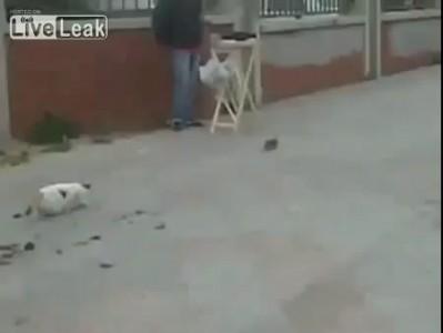 Кот на мгновение потерял смысл жизни