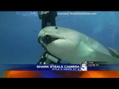 Акула крадет подводную камеру