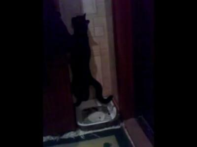 Кот гадит стоя