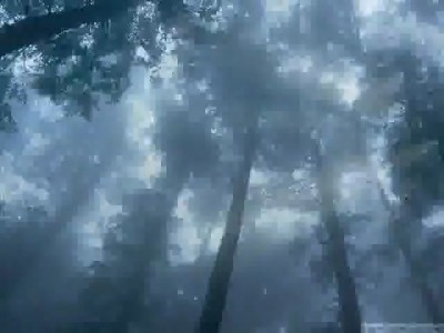 Лес. Музыка для релаксации.