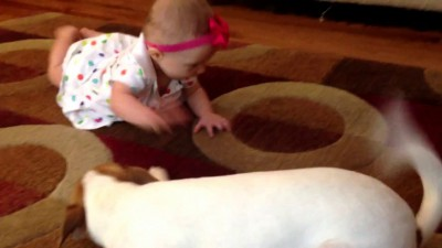 Jack Russell Terrier Dog Tries to Teach Little Girl to Crawl