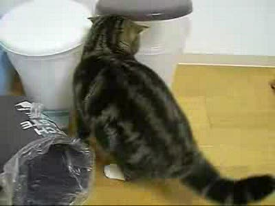 Кот в мусорке