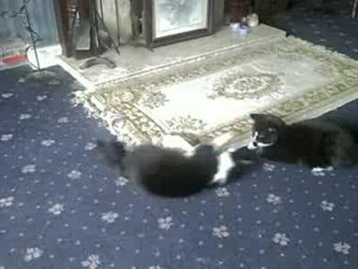 Веселые игры котов