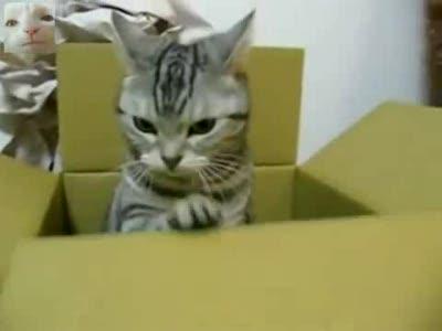 Кот-телеграфист