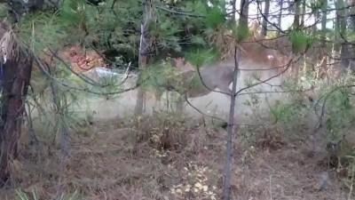 Мужик помог оленю