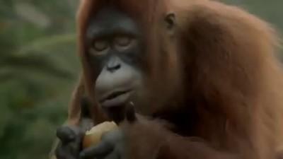 Танцующая обезьяна Всем хорошего дня!