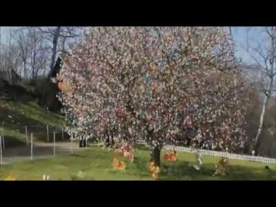 ПАСХАЛЬНЫЕ ТРАДИЦИИ. Невероятно! 10 тысяч яиц на одном дереве