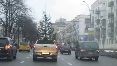 Елка-путешественница! Christmas Tree the traveler!