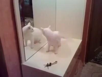 8. Очень злая кошка, кошке не нравится собственное отражение в зеркале