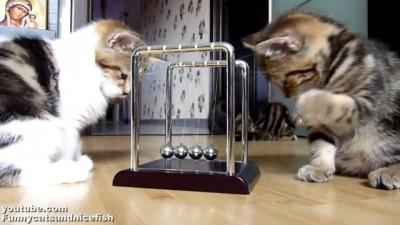 Котята изучают законы физики на практике