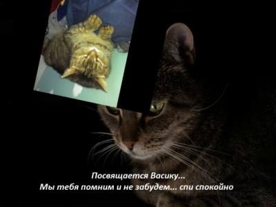 Памяти Васика