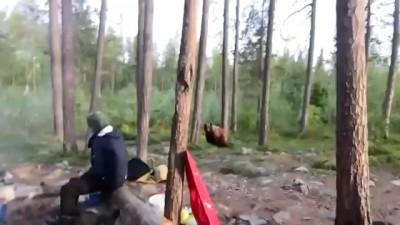 Встреча туристов с медведем в Умбе