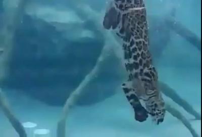 Видео Кайфат