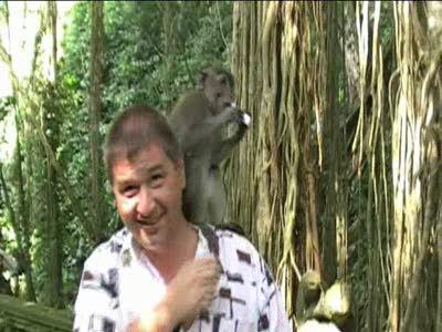 Ограбление по-обезьянски