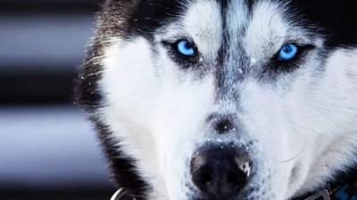 Самые опасные породы собак. ТОП 5
