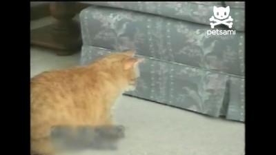 Непослушный котёнок