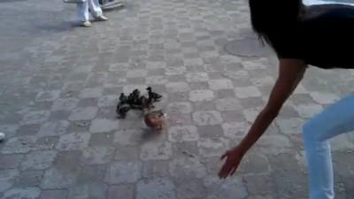 Жители Томска перевели через улицу утку и 11 утят