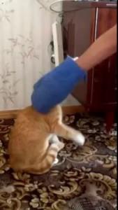 Пацан довел кота!!! СМОТРЕТЬ ДО КОНЦА!!!