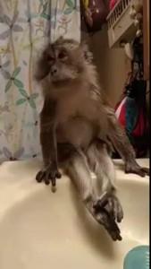 Cute Monkey Takes Bath / Милая обезьянка принимает ванну