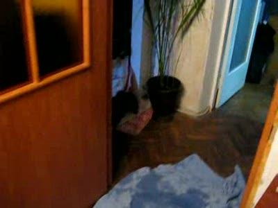 Собачка после ванной