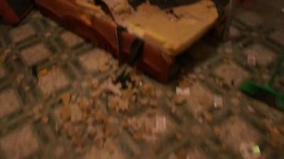 Две собаки устроили армагеддон в квартире