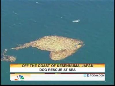 Спасение собаки с острова обломков в Японии