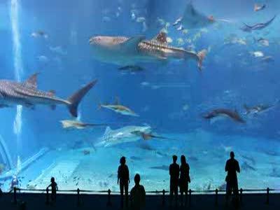 Второй по величине аквариум в мире