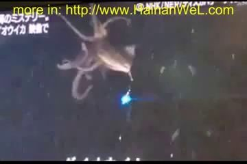 Exclusive World News GIANT SQUID January 2013