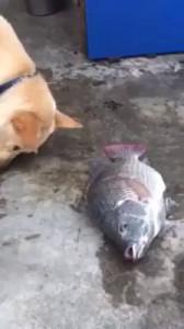 собак поит рыбу