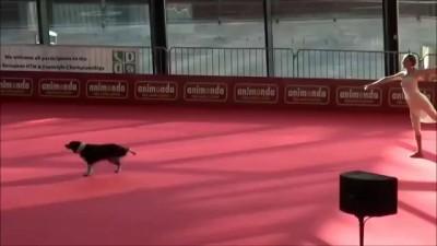 Красивое выступление собаки и ее хозяйки