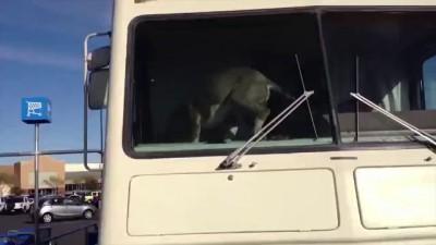 Собака - подонок