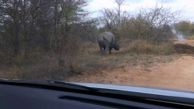 Носорог подрихтовал кузов