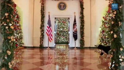 Пёс Обамы готовится к Рождеству