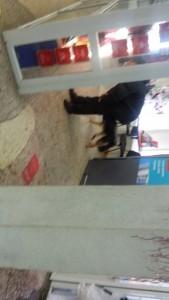 собаки в магазине