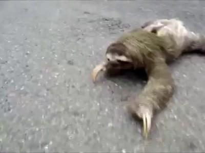 Ублюдок, мать твою, а ну иди сюда