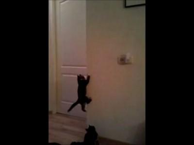 Котята лазают по стенам