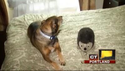 Собакен спас малыша