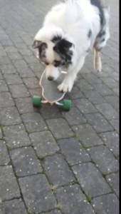 собакен2