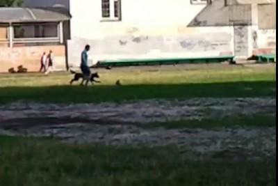 Собака играет в футбол. Dog plays football