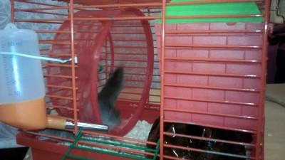 мыши в плену