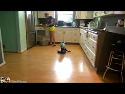 Челюсти на кухне