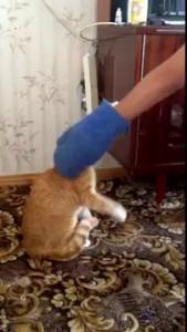 бешенный котяра