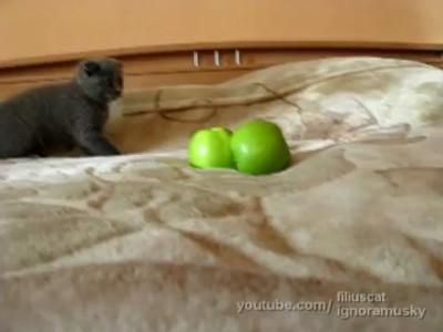Котенок против ДВУХ страшных неведомых хреней