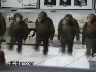 Мохнатые танцы!