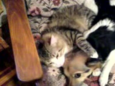 Котя и Кузя