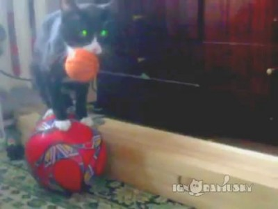 One cat two balls (Кот и два мяча)