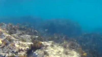 Ещё рыбки на банке в море