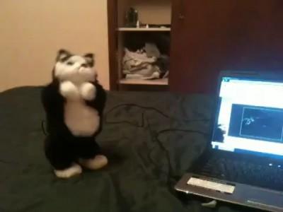 USB-кот